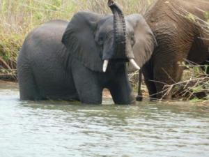Malawi-2013- 502C